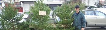 Природни елки на плоштадот