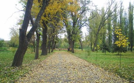 Ќе се сечат старите дрвја во Градскиот парк