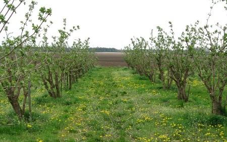 Ниските температури катастрофални за земјоделските култури