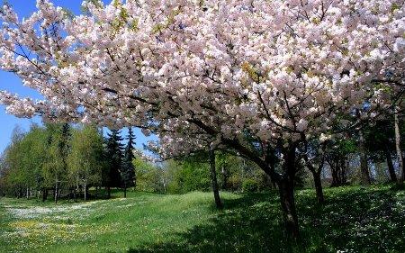 Денес почнува пролетта, а викендов летно сметање на времето