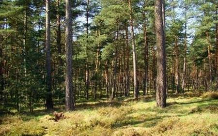 Се враќа делумната забрана за движење во шуми