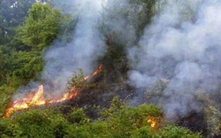 Гореше борова шума во Студена Бара